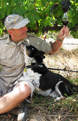 Winemaker, Paul Smith, with Spot the dog and the cabernet grapes
